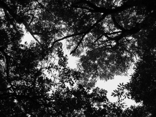 800px-forest_canopy_at_helderberg_nature_reserve_capetown1
